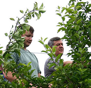 Apple thinning workshop in NNY; photo: Kevin Iungerman/CCE