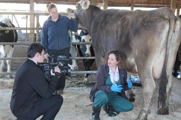 Dr. Jessica Scillieri-Smith talks with WWNY TV 7 News Reporter Tyler Head as she collects a milk sample at Hy-Light Farms, one of 143 farms participating in the NNYADP-funded project identifying lesser-known mastitis causes. Holding the Brown Swiss cow is farm co-owner Heather Hyman. Photo: Kara Lynn Dunn/NNYADP