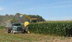Harvesting corn in NNY