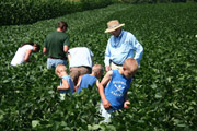 Soybean scouting workshop in NNY in 2011. In 2013, the NNYADP funded a benchmarking corn and soybean disease survey project. Photo: NNYADP